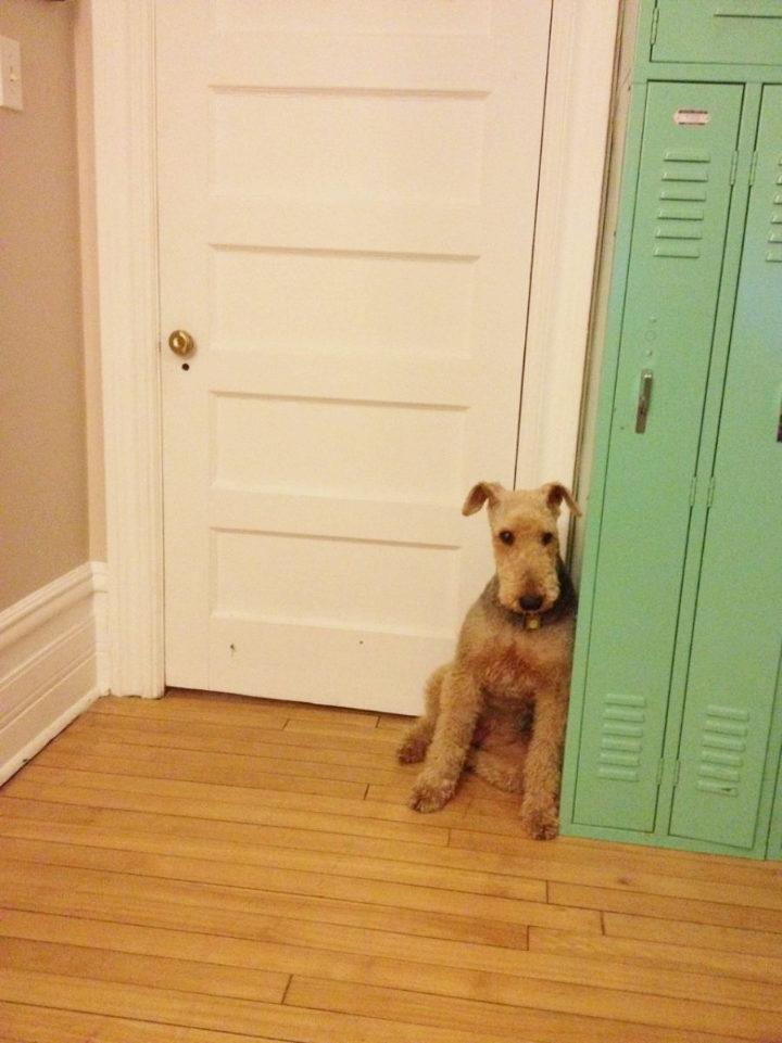 Dog leaning against vintage lockers in frustration