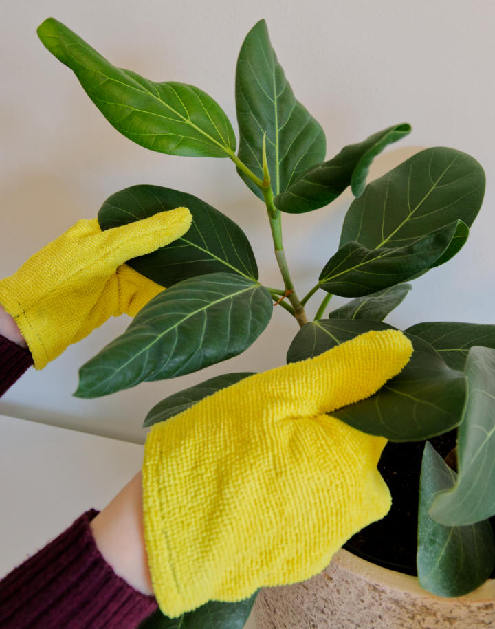 Using plant dusting gloves on leaves