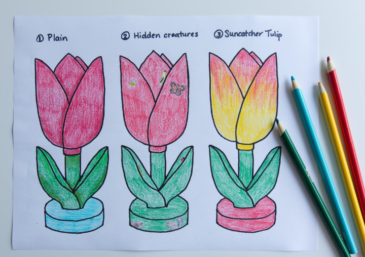 Three sketches of tulips coloured in pencil crayons, one plain red with shading, one red with small bugs and animals on it, and one yellow with red petal tips.