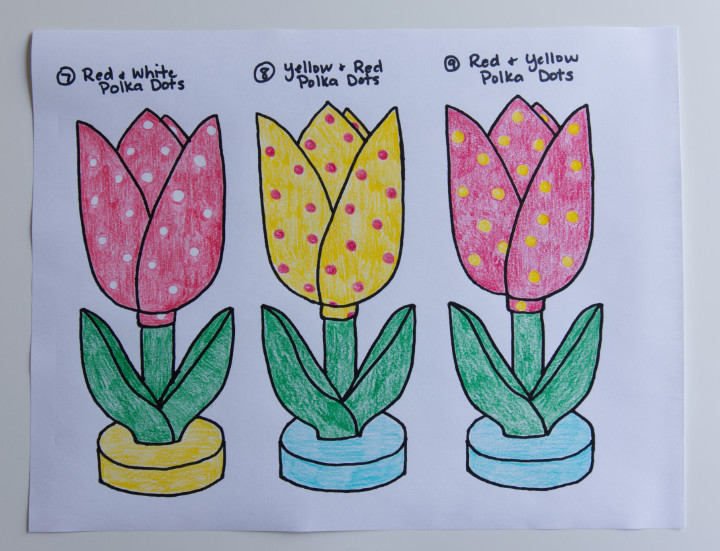 Three sketches of tulips coloured in pencil crayon, one red with white polka dots, one yellow with red polka dots, and one red with yellow polka dots.