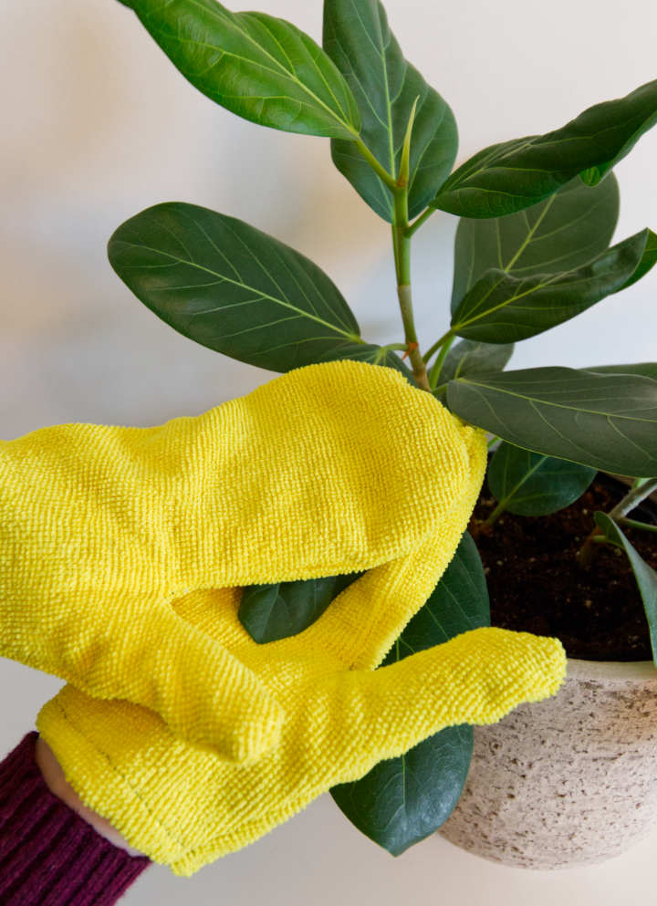 Wiping plant leaves with DIY plant dusting gloves