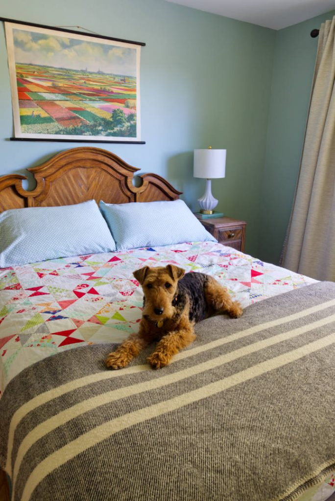 A welsh terrier lays on a bed with a colourful quilt and a dark grey wool blanket with stripes