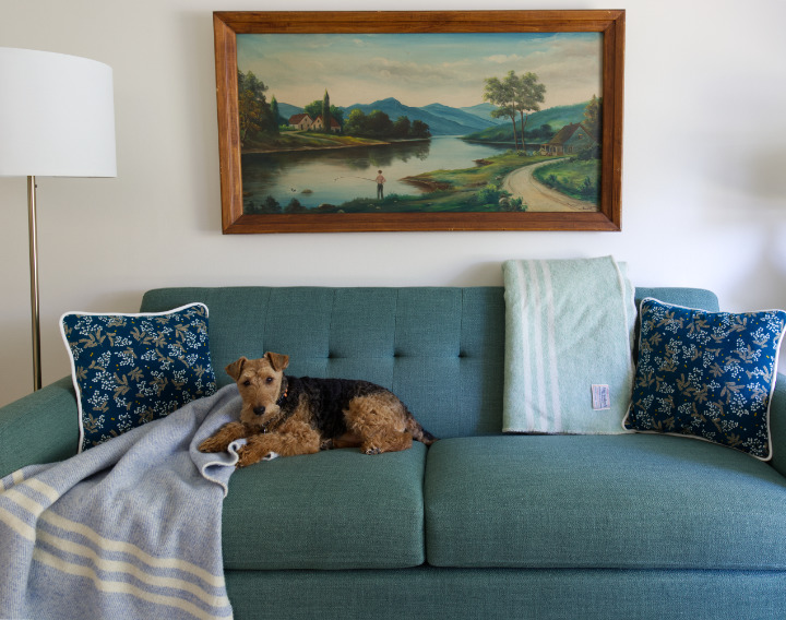A welsh terrier lays on a green couch with a blue striped wool blanket draped nearby
