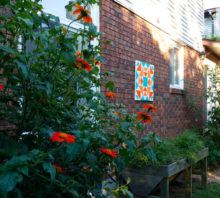 Deep orange Mexican sunflowers in the foreground with the orange and turquoise barn quilt on a brick wall in the background